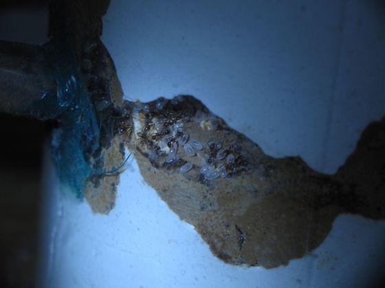 noda externes Nest Kammer