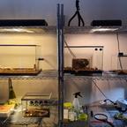 Atta cephalotes Setup [12.01.20]
