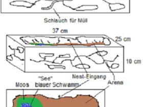 Skizze Formicarium