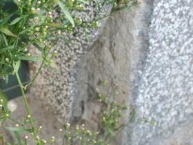 Unbeobachtete Ameisenart Eingang Nest verwaist