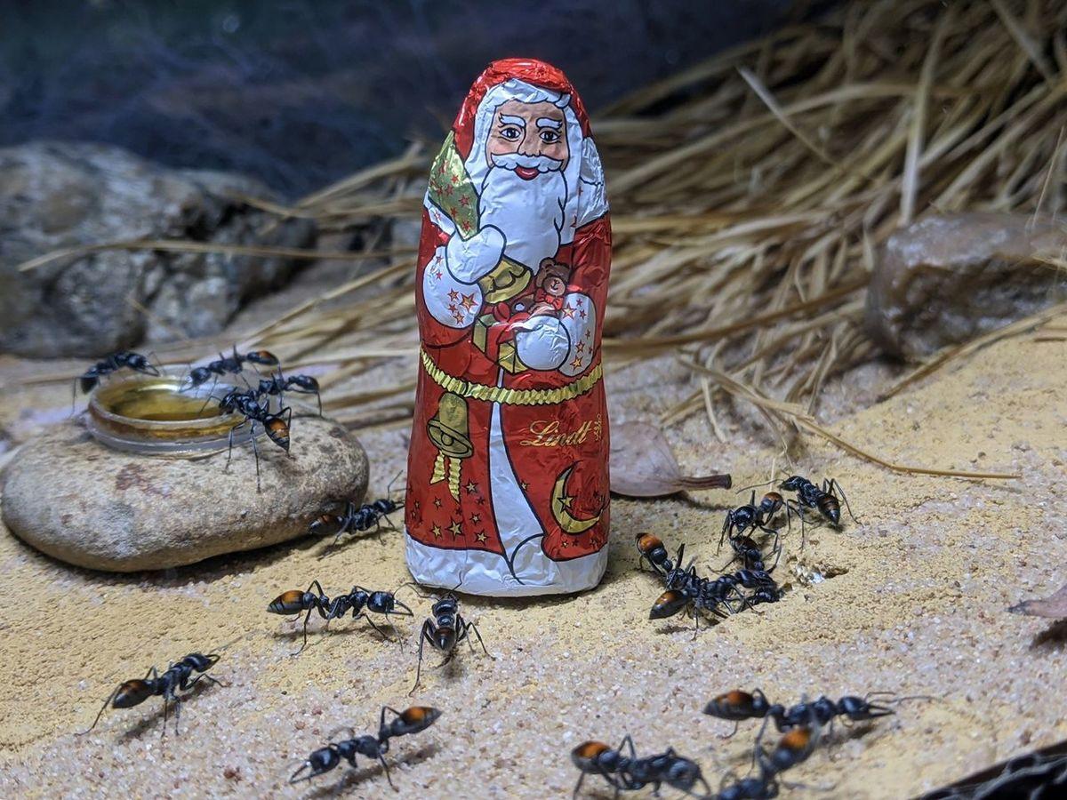 Advent, Advent, der Nikolaus rennt...