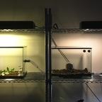 Atta cephalotes Setup 12.10.19