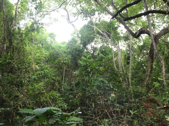 Forest in the Ivory Coast