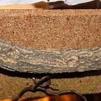 Dolichoderus bispinosus 42 Korknest 05