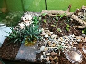Camponotus fulvopilosus Haltungsbericht