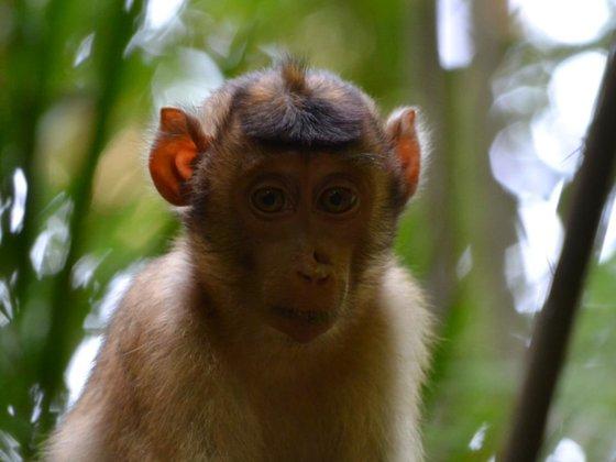 Affen-Portrait