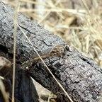 Eine Raubfliege (Asilidae), welche sehr geschickte Jäger sind.