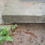 Lasius sp. niger 02 verwaist seitlich draußen
