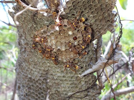 Wespen auf Sansibar
