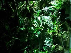 Regenwald im Wohnzimmer