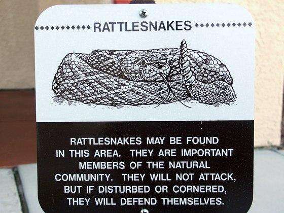 Giftige Schlangen sind in Arizona keine Seltenheit. Zumindest noch...