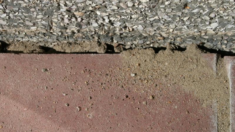 Lasius sp. niger 03 verwaist Eingang 01 draußen zum Haus