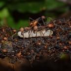 larvae5