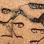 Dolichoderus bispinosus 46 Korknest 07