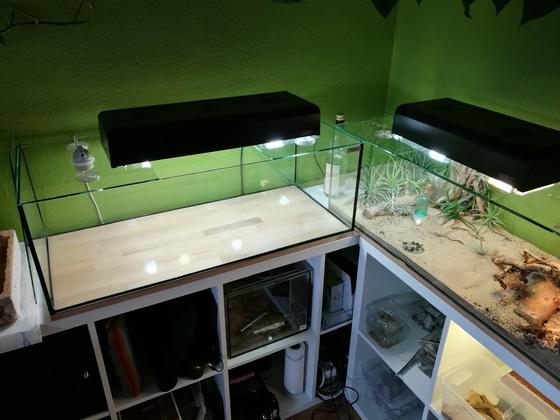 Projekt Aquaterrarium / Feuchtterrarium